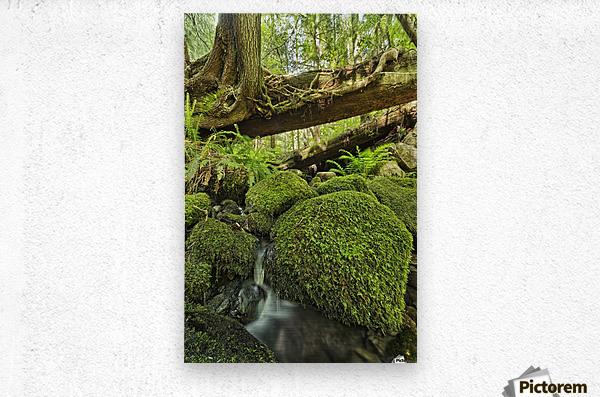 Rainforest in Avatar Grove near Tofino; British Columbia, Canada  Metal print