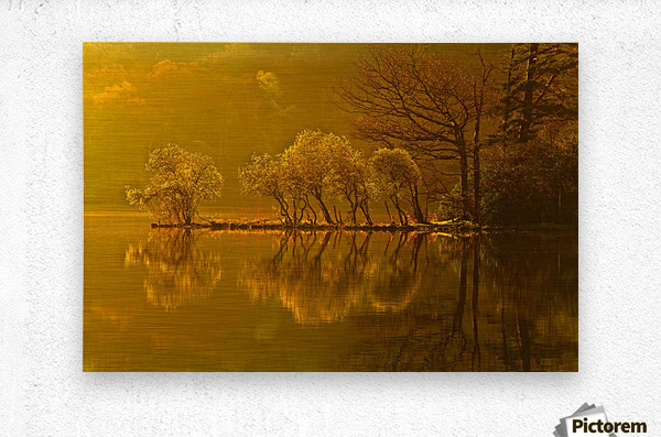 Gold Morning, Lake District, UK  Metal print
