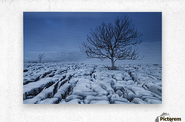 Cold Blue Trees, Yorkshire Dales, UK  Metal print