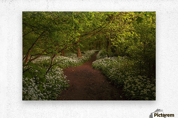 The Path to Fairytales, Ramsons Wood, Lancashire, UK  Metal print