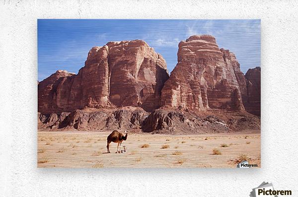 Baby camel and mother; Wadi Rum, Jordan  Metal print