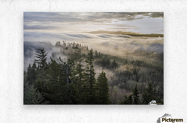 Fog and forest seen from Coxcomb Hill; Astoria, Oregon, United States of America  Metal print