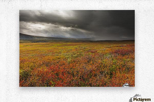 A storm passes over the bright colors of autumn in Denali National Park & Preserve, Alaska.  Metal print
