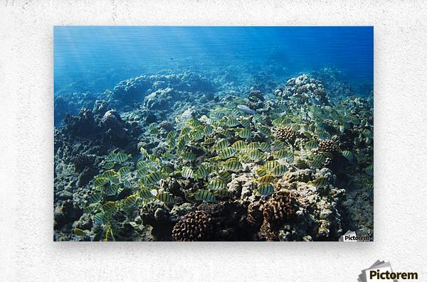 Tropical Reef in Hawaii-  Metal print