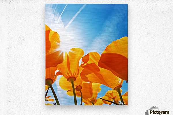 Field of Flowers with Blue Sky, Macro View  Metal print