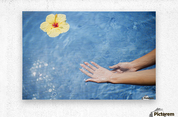 Dipping hands in the water with a floating flower; Island of Hawaii, Hawaii, United States of America  Metal print
