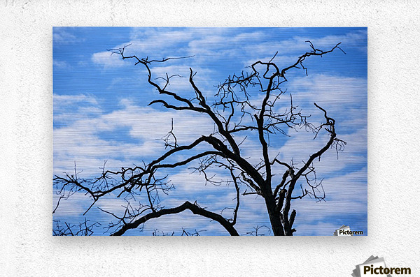 A dead tree is silhouetted against the sky; Tahlequah, Oklahoma, United States of America  Metal print