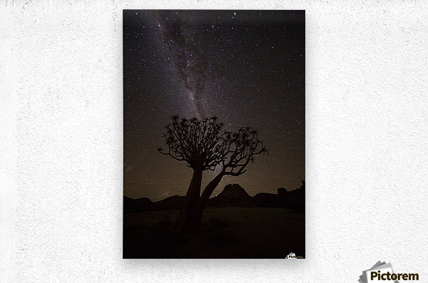 The milky way slashes across the night sky above a quiver tree (kokerboom, aloe dichotoma) in Richtersveld National Park; South Africa  Metal print