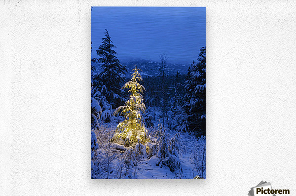 A festive Mountain Hemlock evergreen tree strung with white lights and covered in snow in a wintery landscape, Kenai Mountains; Moose Pass, Alaska, United States of America  Metal print