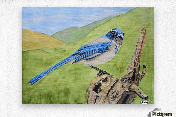 Blue Scrub Jay On Dead Tree  Metal print