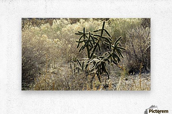 Shimmering  Cactus VP1  Metal print