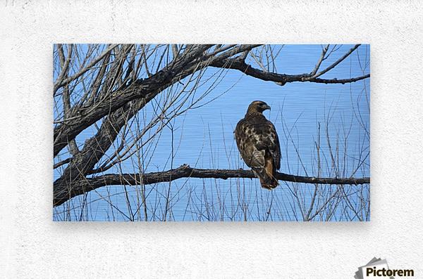 Golden Eagle VP4  Metal print