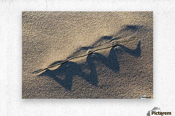 Grass Blade and Serpent Shadow  Metal print