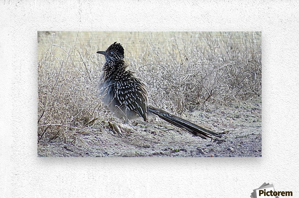 Roadrunner VP4  Metal print