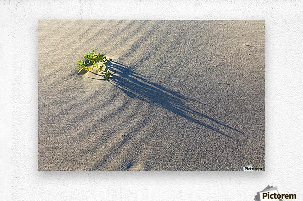 Evening Shadows on Dune  Metal print