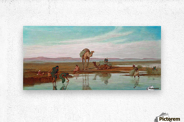 Cutting Rushes by the Nile  Metal print