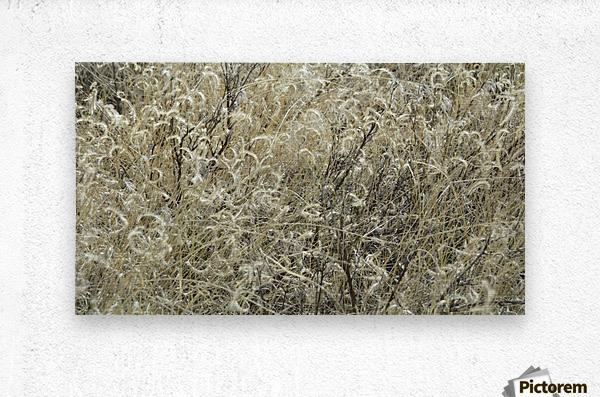 Wildflowers in the Sandia Mountains VP1  Metal print