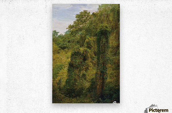 View of a forest in Jamaica  Metal print