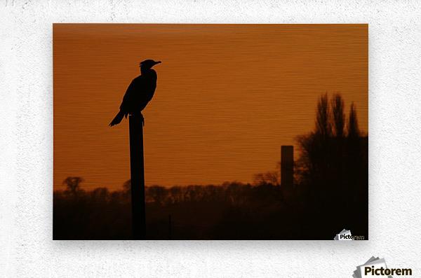 Cormorant perch  Metal print