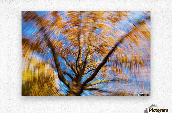 Autumn season in the middle of forest with colourful leaves  Metal print