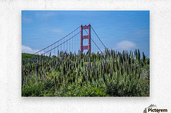 San Francisco Lupines  Metal print