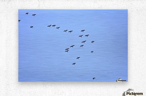 Flock of Geese 2  Metal print
