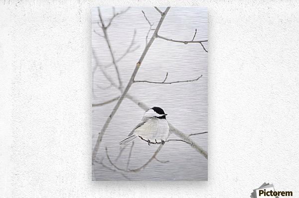 Bird On A Branch  Metal print