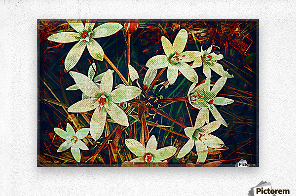 WhiteDarkWallflowers  Metal print