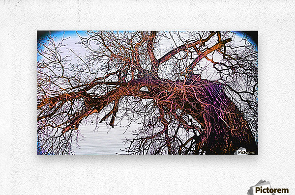 100yearOLDtree  Metal print