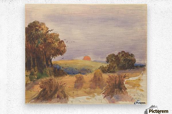 A cornfield at sunset  Metal print