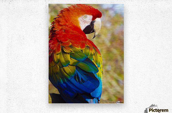 All the Colors of the Rainbow  Metal print