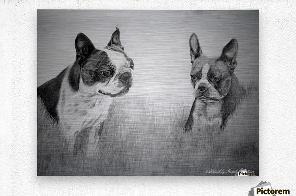 Boston Terriers  Metal print