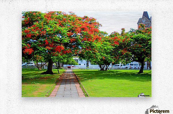 St Kitts Independence Square5  Metal print