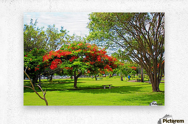 St Kitts Independence Square 6  Metal print