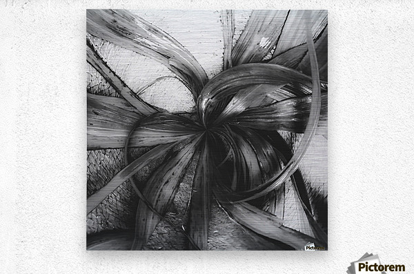 Spiral leaves texture background in black and white metal print