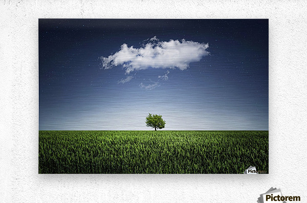 A tree covered with clouds  Metal print
