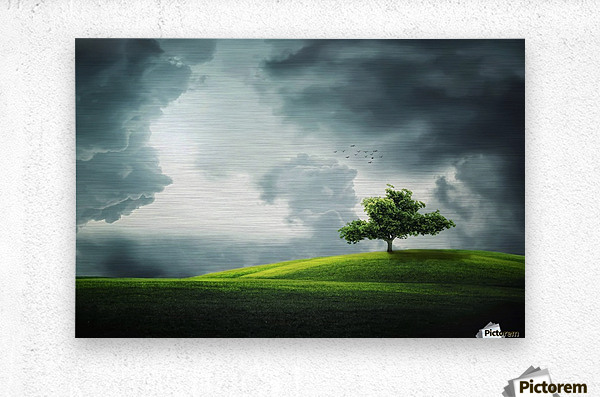 Lonely Tree, birds  Metal print