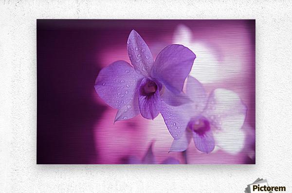 Hawaii, Kauai, White Orchid With Pink Lighting.  Metal print