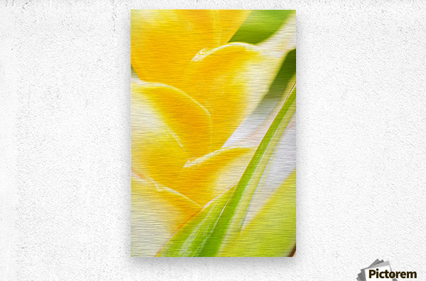 Hawaii, Oahu, Close-Up Of Heliconia Plant.  Metal print