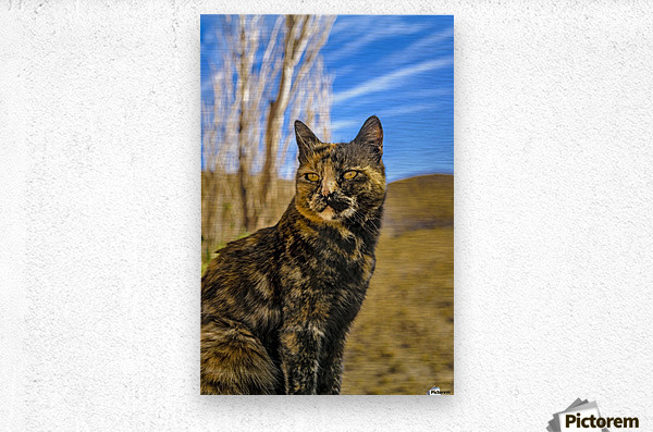 Adult Wild Cat Sitting and Watching  Metal print