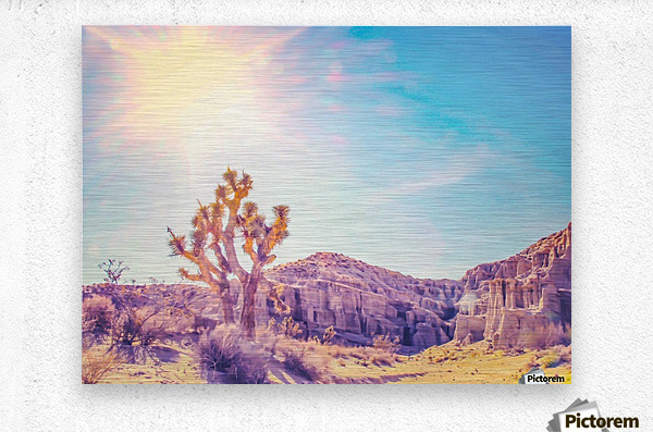 cactus at the desert in summer with strong sunlight  Metal print