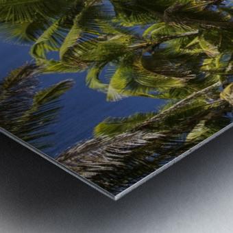 Palm trees along the Puna coastline, near Kalapana; Island of Hawaii, Hawaii, United States of America Metal print