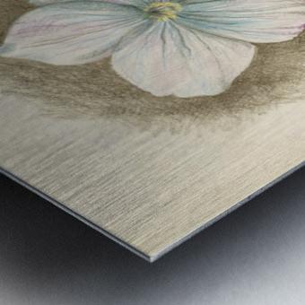Linum Narbonense Metal print