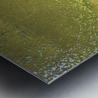 Fish Pond Algae Metal print