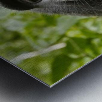 monyet Metal print