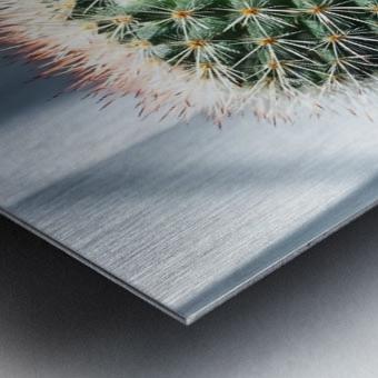 closeup green cactus texture with morning sunlight Metal print