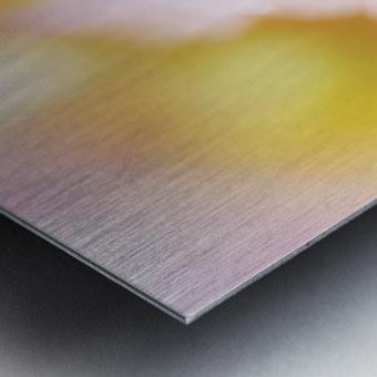 Dreamy Pink Coneflower  Metal print