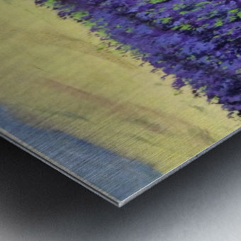 Purple Lavender fields painting Metal print