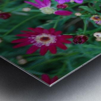 Purple Flowers in Dana Point CA Metal print