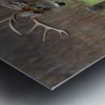 14_1518721195.51 Metal print